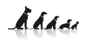 dog-evolve